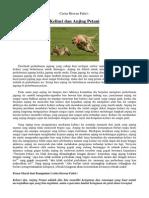 Kelinci dan Anjing Petani, Cerita Hewan Fabel, Tugas Kelas 3 SD
