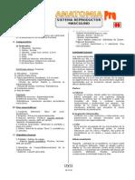 AN-11E-05 (TP - Sistema Reproductor Masculino) FM.doc