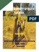 Rice Pakistan Zafar En