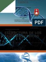 Estructura de Los Acidos Nucleicos . Grupo 1 (2)