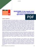Duckweed 01