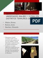 Determinacion de Los Perfiles Sensoriales y Químicos de Vinos Malbec y Syrah