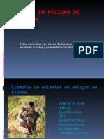 ANIMALES EN PELIGRO DE EXTINCI.ppt