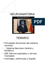 1. NEUROANATOMIA