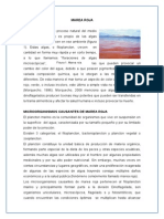 Ensayo-causas de La Marea Roja