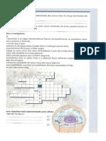 Células Eucarióticas e Procarióticas
