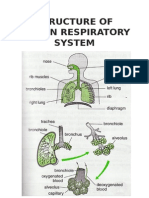 Respiration diagram