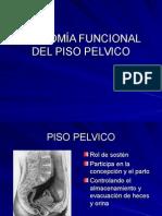 Anatomía Funcional Del Piso Pelvico