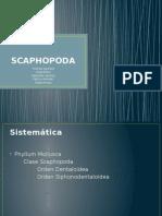 Scaphopoda