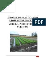 Informe de Prácticas Pre Profesional Modular Karem Cultivos