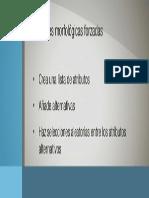 03. Conexiones morfologicas