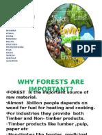 Forest & Biodiversity
