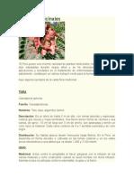 Plantas Medicinales PROR. CARMEN