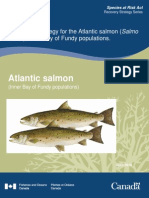 recovery of atlantic salmon