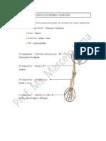 Apostila de Osteologia Dos Mmss e Mmii
