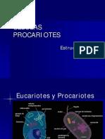 1-1 La Celula Procariota