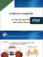UROLOGIA Anatomia urogenital.pptx