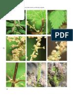Plantas Medicinales De La Ribera