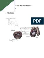 Anatomi Lapisan Scrotum dan Limfatik Testis.docx