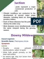 Vine Diseases