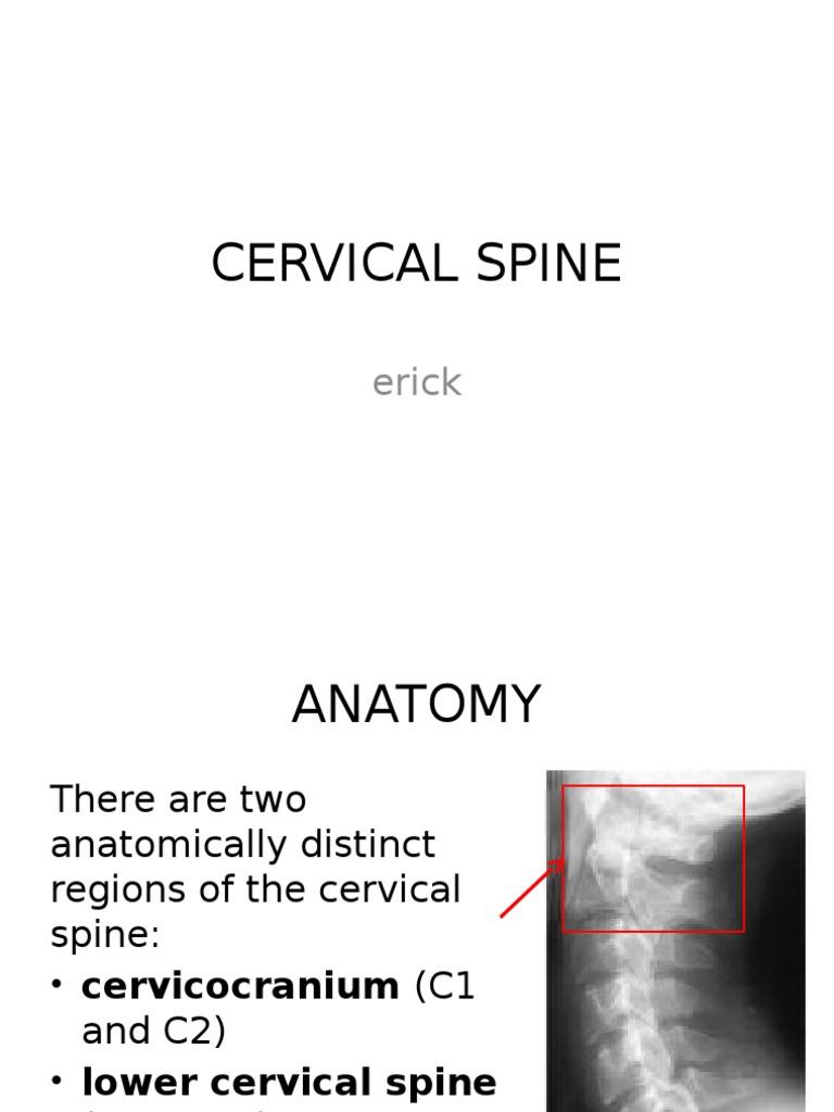 Cervical Spine | Vertebra | Vertebral Column