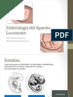 embriologia del sistema musculoesqueletico