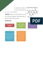 Riboflavina (2)