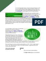 Photosynthesis (Summary)