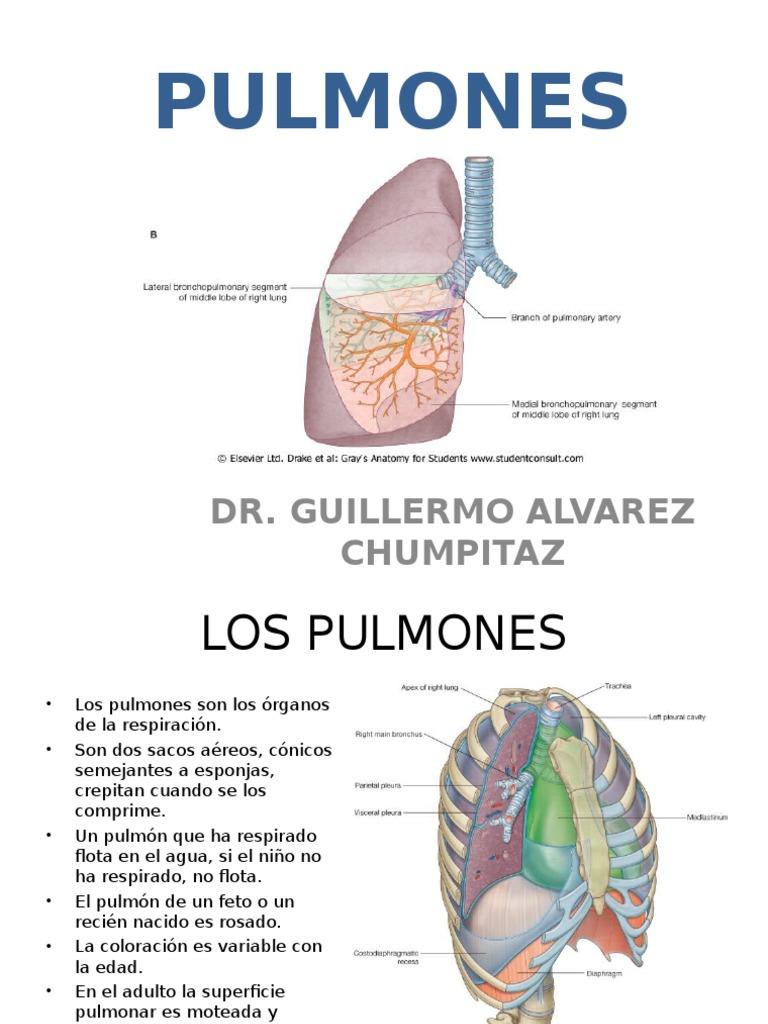 22) Pulmones