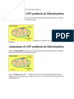 Animation of ATP Synthesis