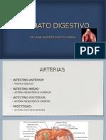 2 Anatomia Aparato Digestivo