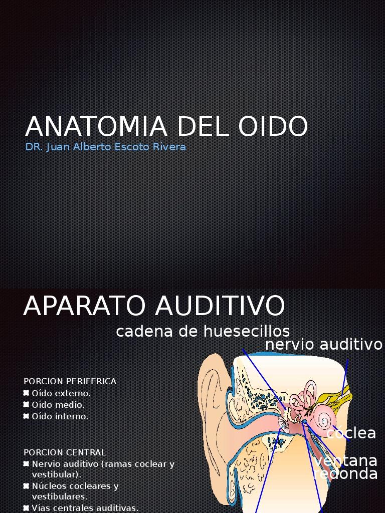 Anatomia Oido