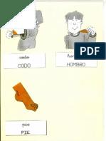 Fichas Partes Del Cuerpo