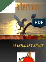 max sinus