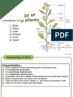 Morphologyoffloweringplants Irootstemleaf 140907095839 Phpapp01