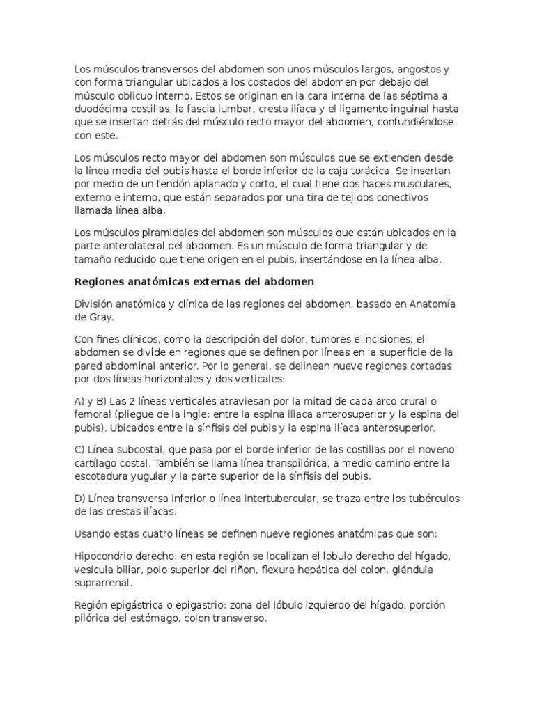 Dorable Definir El Origen En La Anatomía Embellecimiento - Imágenes ...