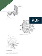 Colectomia Izquierda, Anastomosis Termino-Terminal