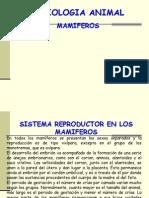 Sistemas de Los Mamiferos