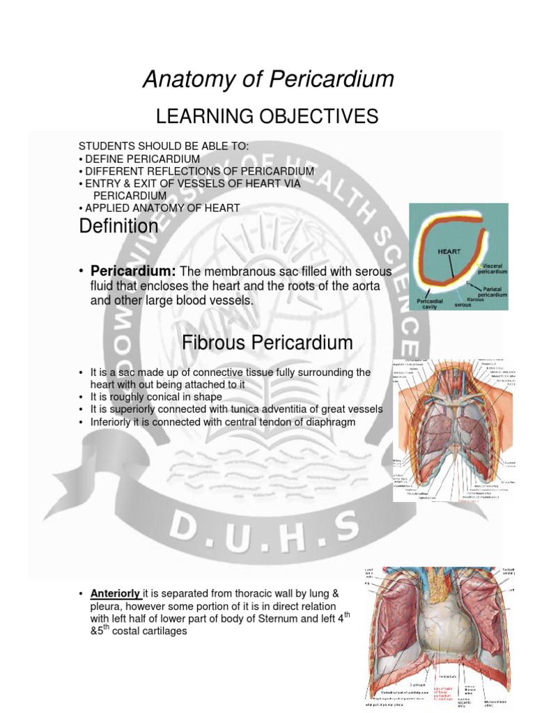 pericardium   Heart Valve   Heart
