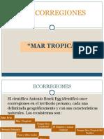 El Mar Tropical Del Perú.