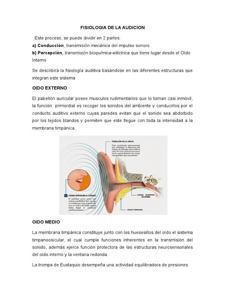 Fisiologia de La Audicion