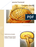 Neuroanatomía Funcional