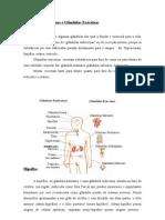 Glandulas Endocrinas e Exocrinas