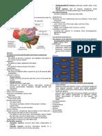 Neuropsychological Assesment