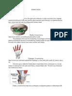 skeletal system - google docs