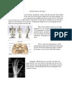 skeletal system lab report - google docs