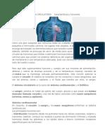 SISTEMA CIRCULATORIO Características y Funciones
