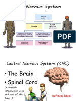 powerpoint 15-16 nervous system and endocrine system