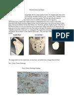 skeletalsystemlabreport-2
