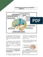 Part 10 Desarrollo y Configuracion Externa de Los Hemisferios Cerebra Les.